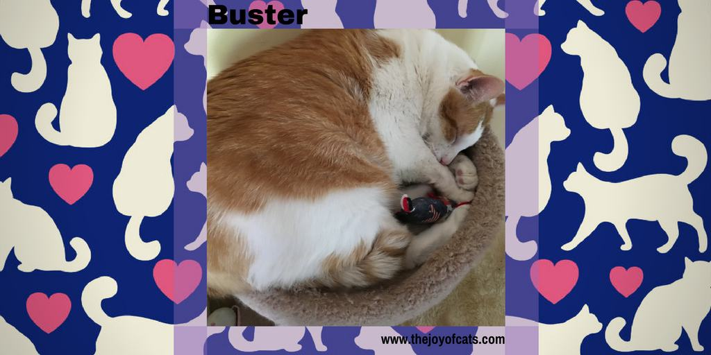 Buster from The Joy of Cats
