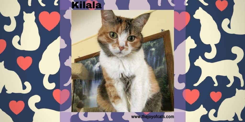 Kilala from The Joy of Cats
