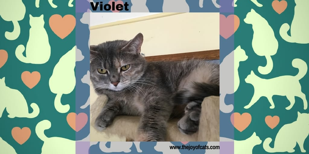 Violet from the Joy of Cats