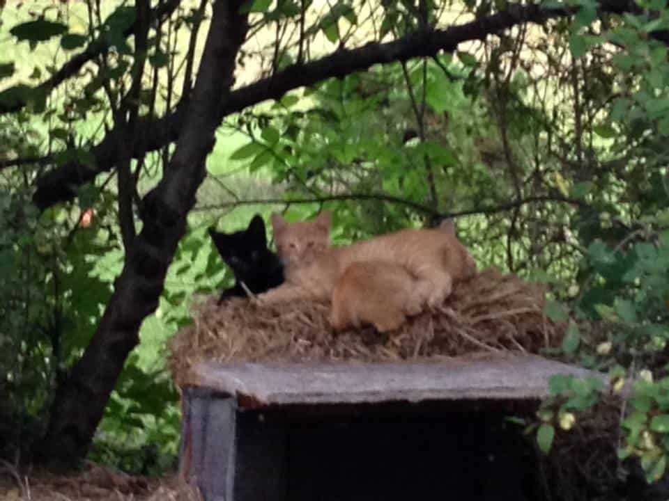 3 kittens on top of cat house in backyard