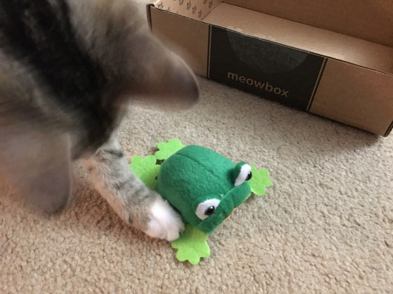 Taco with the frog toy