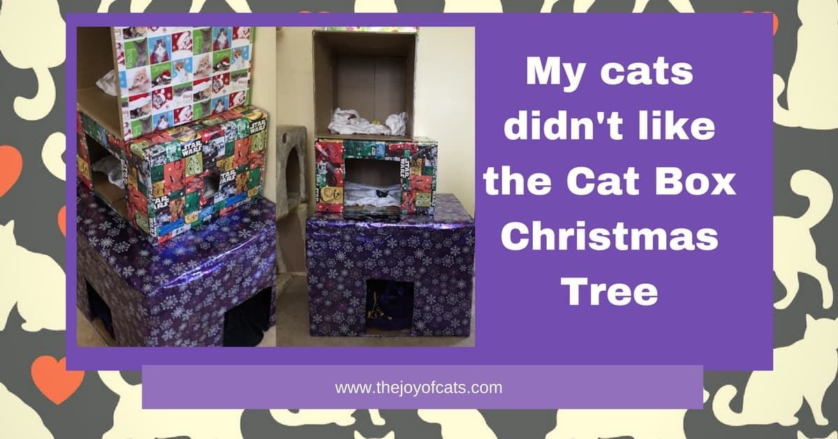 My cats didn't like the Cat Box Christma Tree - Chat Chat with Heidi Episode 1