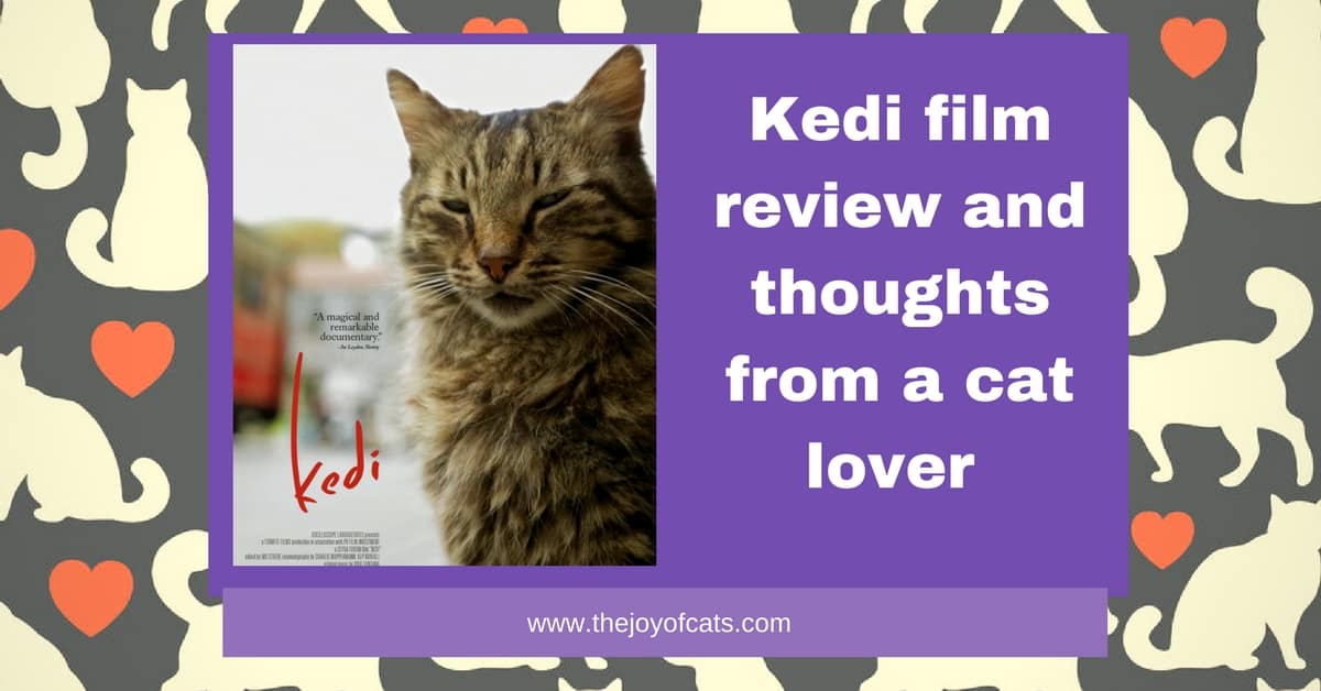 Kedi film review and thoughts from a cat lover