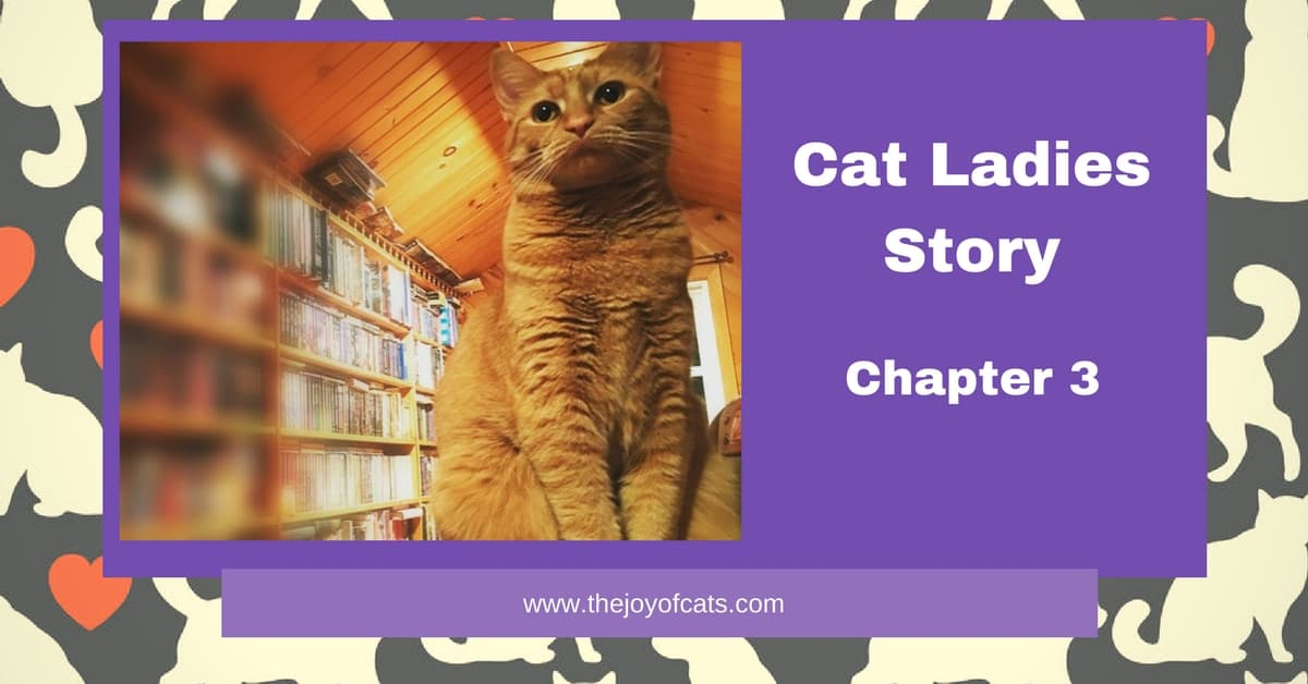 Cat Ladies Story - Chapter 3