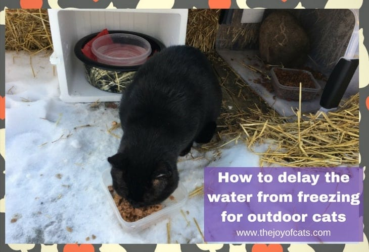 How to delay the water from freezing for outdoor cats