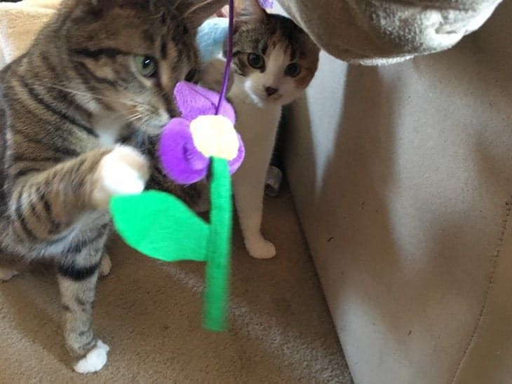 Taco and Nacho with flower
